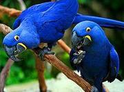 В продаже попугаи!