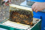 Ульи разные,  медогонки,  пчелоинвентарь,  вощина от производителя